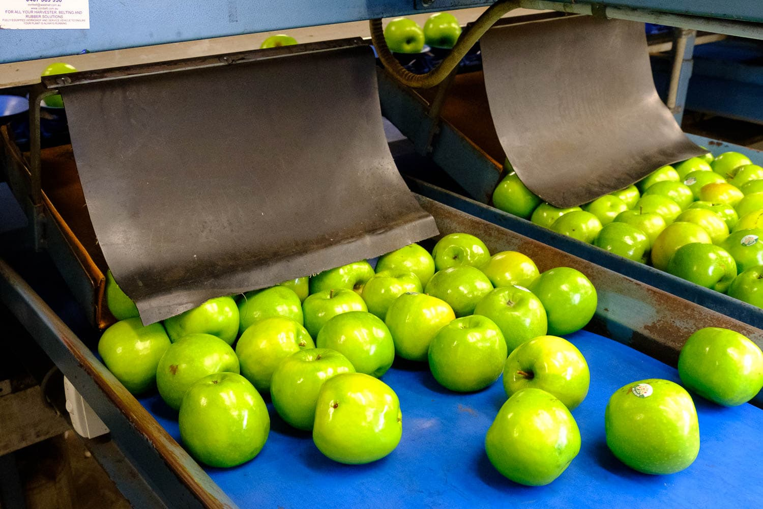News: WA Apples to set Sail From the Forests to Hong Kong
