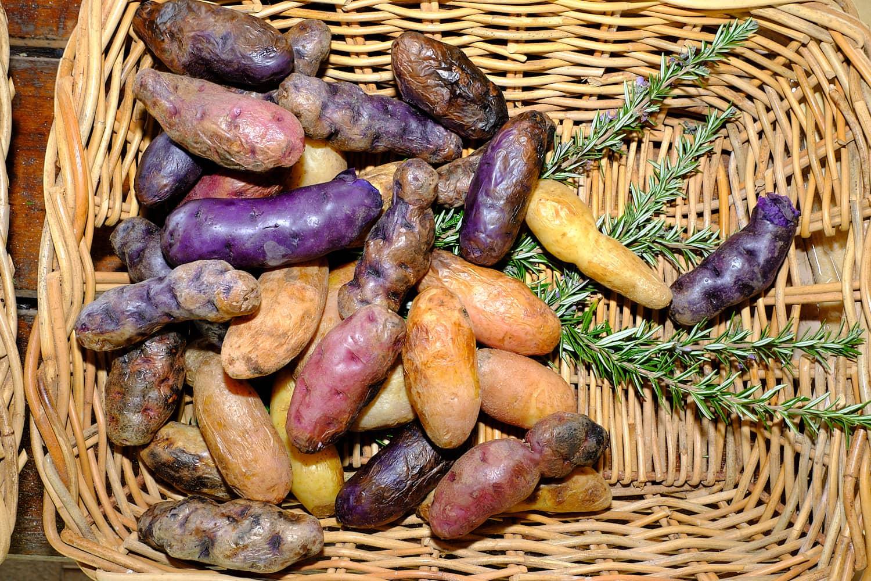 Export Focus for WA Potato Industry
