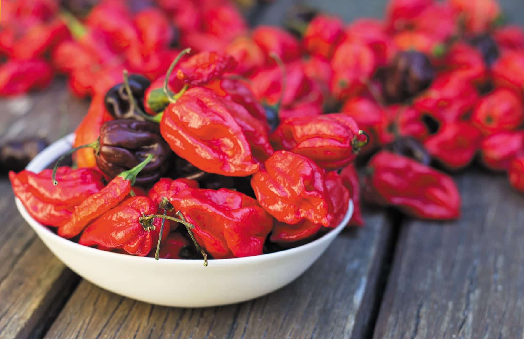 Chilli Festival Harvest the Heat Is Coming to Fremantle