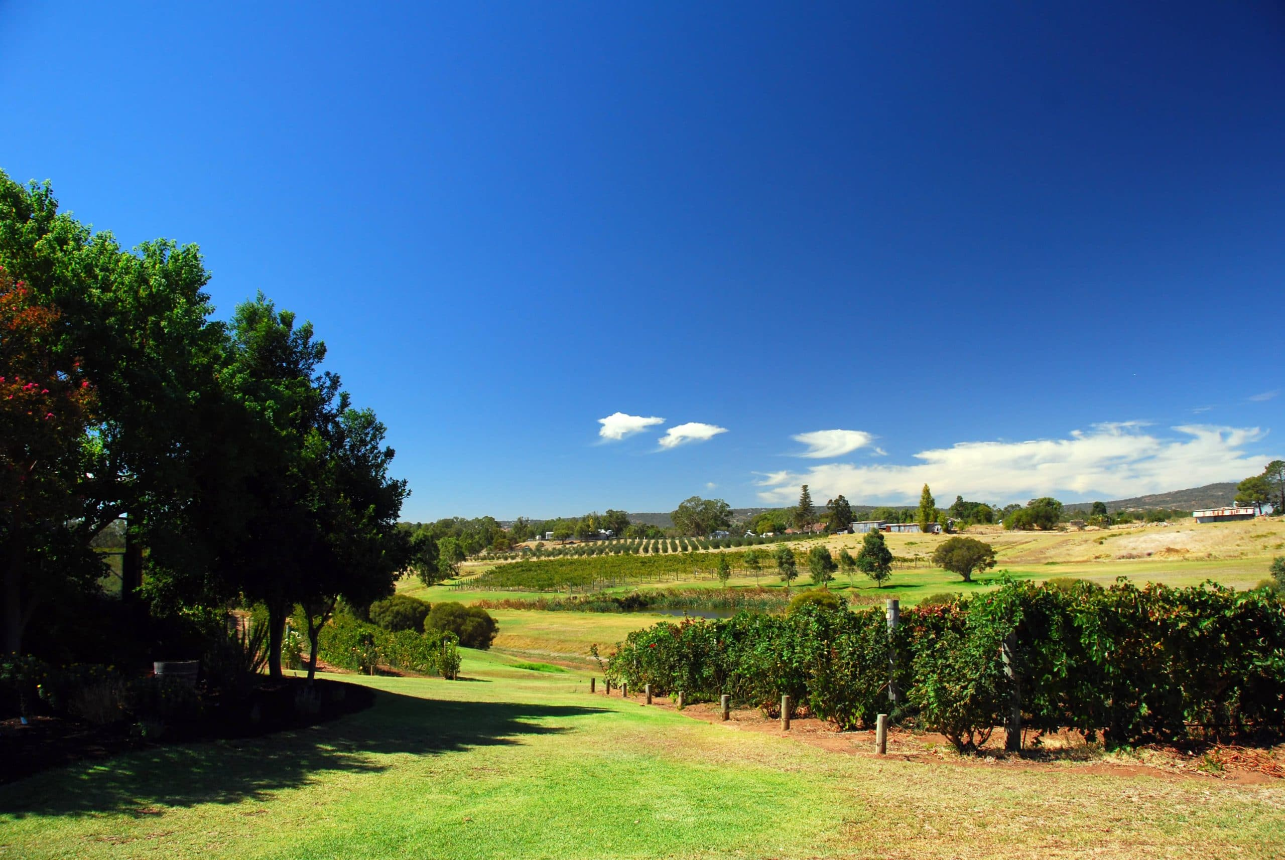 Swan Valley Launches New Cider and Ale Trail